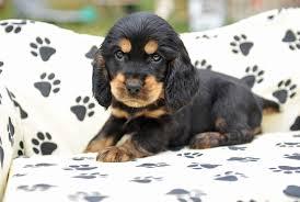 Questi meravigliosi cuccioli sono visibili nella nostra struttura, vieni a  conoscerli di persona, oppure contattaci per una consegna a domicilio!