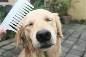 cura cucciolo