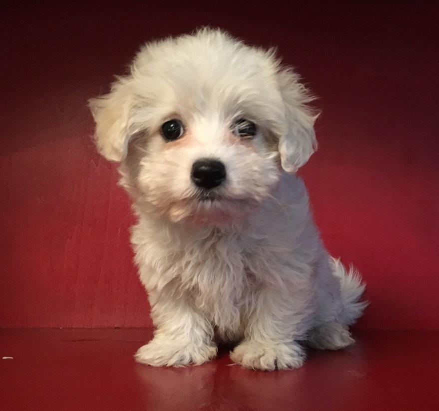 Cuccioli disponibili lo scodinzolo for Cani giocherelloni